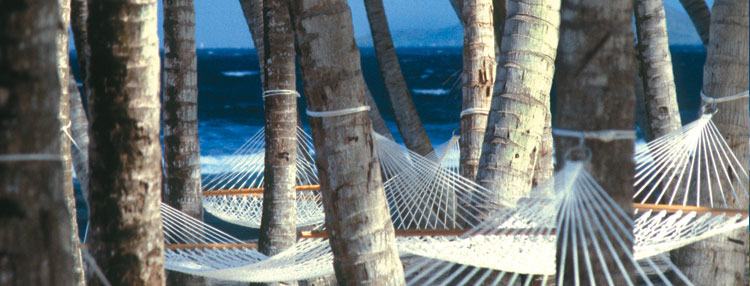Stunning Hammock Lined Beaches in St Croix